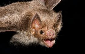 Image result for bat