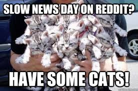 Slow news day on reddit? have some cats! - Slow day on Reddit ... via Relatably.com