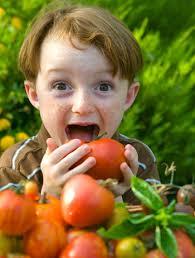 upcoming essay alert  organic farming   one hungry mermaidorganic kid