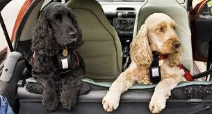 Best <b>Dog Car</b> Seats 2019 - Keep Your <b>Pet</b> Safe While Traveling