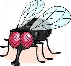 Image result for cartoon flies