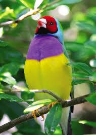 طيور رائعة images?q=tbn:ANd9GcR