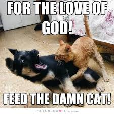 For the love of God! feed the damn cat