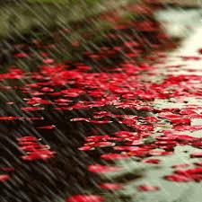 Image result for عکس های متحرک باران پاییزی