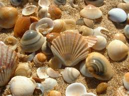 Морское Images?q=tbn:ANd9GcRti7WMqJPe7jjzifN2qlFBYAeVJM2J_HQiVxJ8vQxAB_wfDWyO