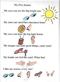 poem no my five senses circles my five senses and st grade sharks are so much better then humans we have 6 senses sight taste