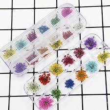 *J  *<b>24Pcs Real Pressed Flower</b> Anne's Lace Dried Flower DIY ...