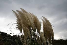 Risultati immagini per vento