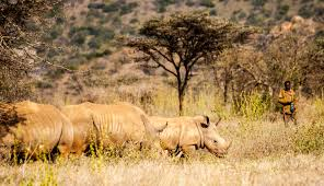 behold wildlife conservation in misadventures on wildlife conservation in photos from a combination of wildlife reserves in laikipia near the base of mt samburu in the north