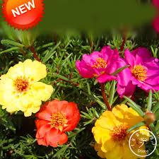 <b>Big Promotion</b>!200 Pcs/pack Mix Sun Flower Plant flores Flower ...