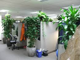 1000 Images About Indoor On Pinterest  Office Plants Container Plants And Landscaping Company