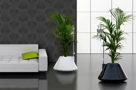 room plants x: living room pretty living room plant interior design ideas