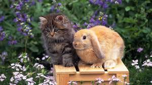 Résultat de recherche d'images pour 'lapin fond d'écran mignon'