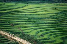 Sapa, Bac Ha Market, H'Mong, Lao Chai and Ta Van ( 4 nights / 3 days ) on Thu.SP2