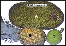 Resultado de imagen de Artocarpus heterophyllus