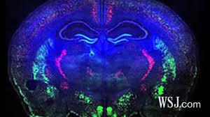 How the <b>Brain's Wiring</b> Works - YouTube