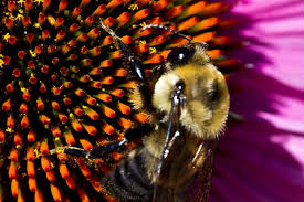 <b>Wasps</b> and bees: A guide to identifying Stinging Insects - PestWorld