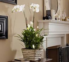 feng shui decorating tips create eye appeal and great chi appealing pictures feng shui
