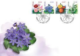 """Attēlu rezultāti vaicājumam """"zilās vizbulītes ziedi"""""""