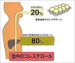 「コレステロールは肝臓で作られる」の画像検索結果