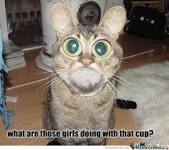 Shocked Cat by recyclebin - Meme Center via Relatably.com
