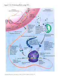 a biology  glenlola collegiate schoolbiology department