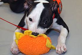 Mouthing, Nipping and Biting in <b>Puppies</b>   ASPCA