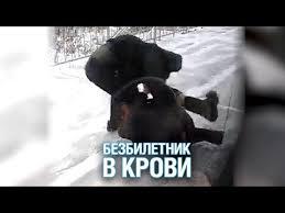 Видеозаписи Подмосковье Сегодня | ВКонтакте