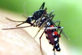 làm sao ngăn chặn côn trùng cho hiệu quả