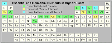 List of Essential Elements