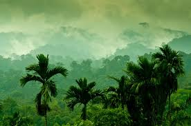 <b>Southeast Asia's</b> forests - their future affects ours   EU Science Hub
