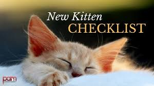 Top Tips for <b>New Kitten</b> Owners: The Basic Kitten Habits