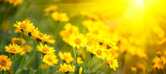 Image result for springtime pictures