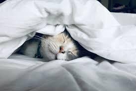 I Don't Want Kids Because <b>I Love to Sleep</b> | by Nisha Mody | Your ...