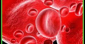 Células sanguíneas reparadoras