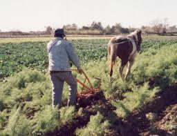 Resultado de imagen para dia trabajador rural