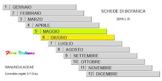 Consolida regalis [Speronella consolida] - Flora Italiana