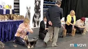 International Dog Show Tallinn Winner 2018 (TOY SAVOY <b>YSL IN</b> ...