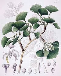 The <b>Life</b> Story of The Oldest <b>Tree</b> on Earth - Yale E360