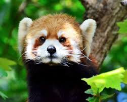 essay on quotwild life conservationquot  free essay on wild life conservation  free writing