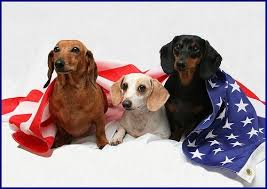 Image result for PATRIOTIC dachshunds