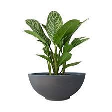 Yuccabe Italia <b>Fox</b> B Ktr 18 <b>Inches</b> Grey Bowl Planter: Amazon.in ...