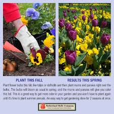 Plant Bulbs in the <b>Fall</b> for <b>Bursting Spring</b> Blooms! | Alsip Home ...