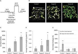Priming of Plant Resistance to Heat Stress and Tomato ... - Frontiers