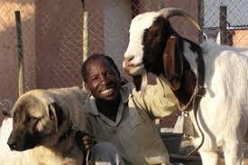 Risultati immagini per cani da difesa namibia