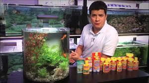 Что нужно знать, чтобы запустить аквариум. Часть 1 - YouTube