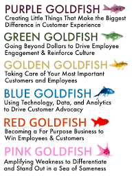 breaking down the purpose of the goldfish series purple goldfish six goldfish books