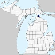 Campanula trachelium - Michigan Flora