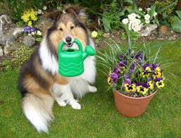 Image result for pet gardening