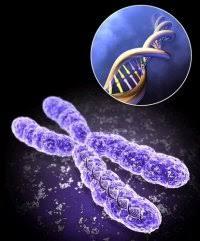 Генетика следует определенным правилам